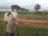Jonas og hesten Blue er gode venner.