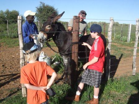Satan (eselet) har blitt bitt av en av hestene så vi måtte fikse opp litt i såret.