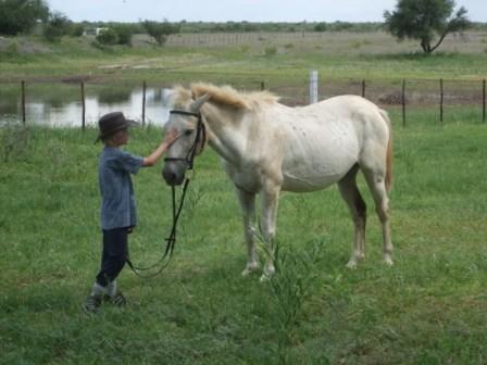 Knut i forklarende samtaler med Ponni. Han nekter å tvinge Ponni. Hesten er nemelig gammel og har derfor privilegie (sier Knut) til å gå så sakte den vil. Vi kan jo si hva vi vil men det er i allefall han som bestemmer. Basta!