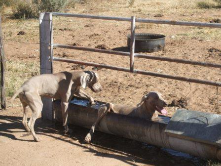 Namibia-Mai 2010 242