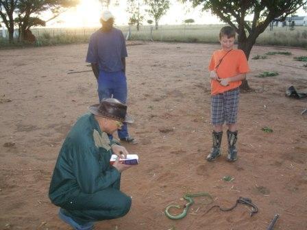Vi har tatt en del slanger på farmen til nå, alle farmerne i området sier de også har mye slanger. Her studerer Holger 2 av 3 vi skjøt på en dag...