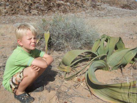 Knut med Namibias nasjonal plante Welwitschia, en ekstraordinær plante som kan bli flere tusen år gammel!!