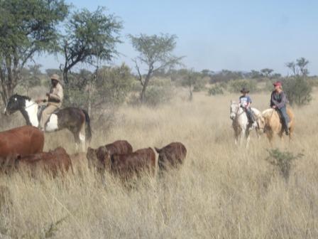 Mamma og Knut på ku-ride-tur, vi er nok litt for ferske til å kunne kalle oss cowboyer enda...