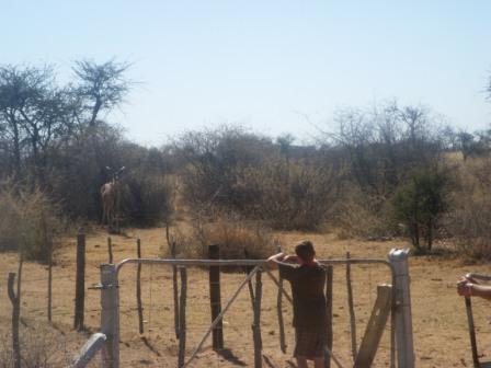 Jonas er også uvurdelig som portåpner, her fikk han en lengre prat med en ung Kudu-hann som så ut til å late som om han var ett tre...