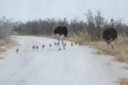 Familien Struts over veien... Damen i brunt og herren i svart.