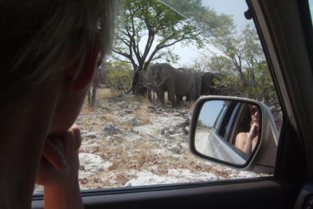 Godt å sitte inne i bilen når pellefanten er SÅÅÅÅH nærme da gitt....