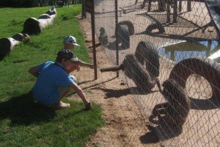 Bavianer er artige dyr, de satt ved gjerdet og tok imot gress og blader og de snappet også ofte til seg solbriller capser og annet løsøre...