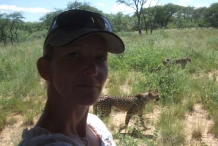 Vi kjørte rundt inne hos Cheetah`ene, det krydde av dem rundt bilen og guiden ga beskjed om et Knut mått sitte i midten...